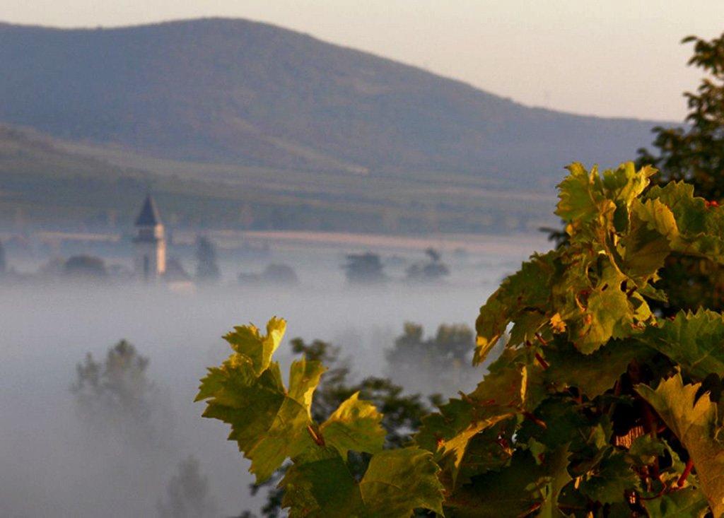 Reuters: High-tech helps tradition to make Tokaj wine