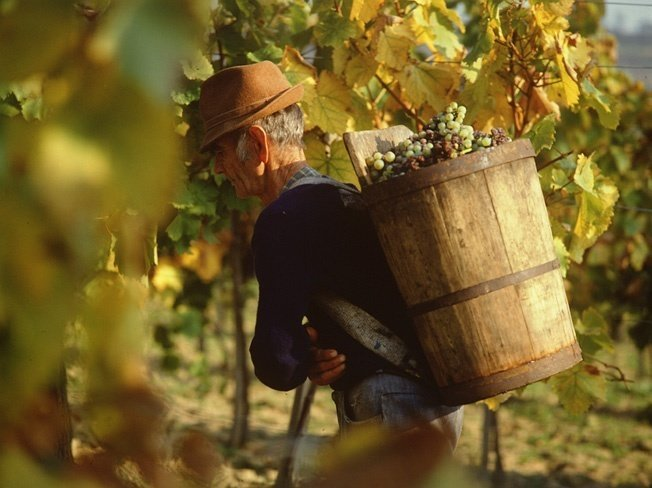 The Tokaj wine region: 15 years of being part of the UNESCO World Heritage