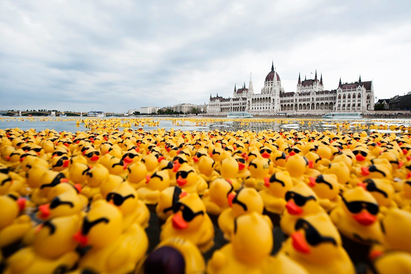Rubber Ducks Invaded the Danube for Charity