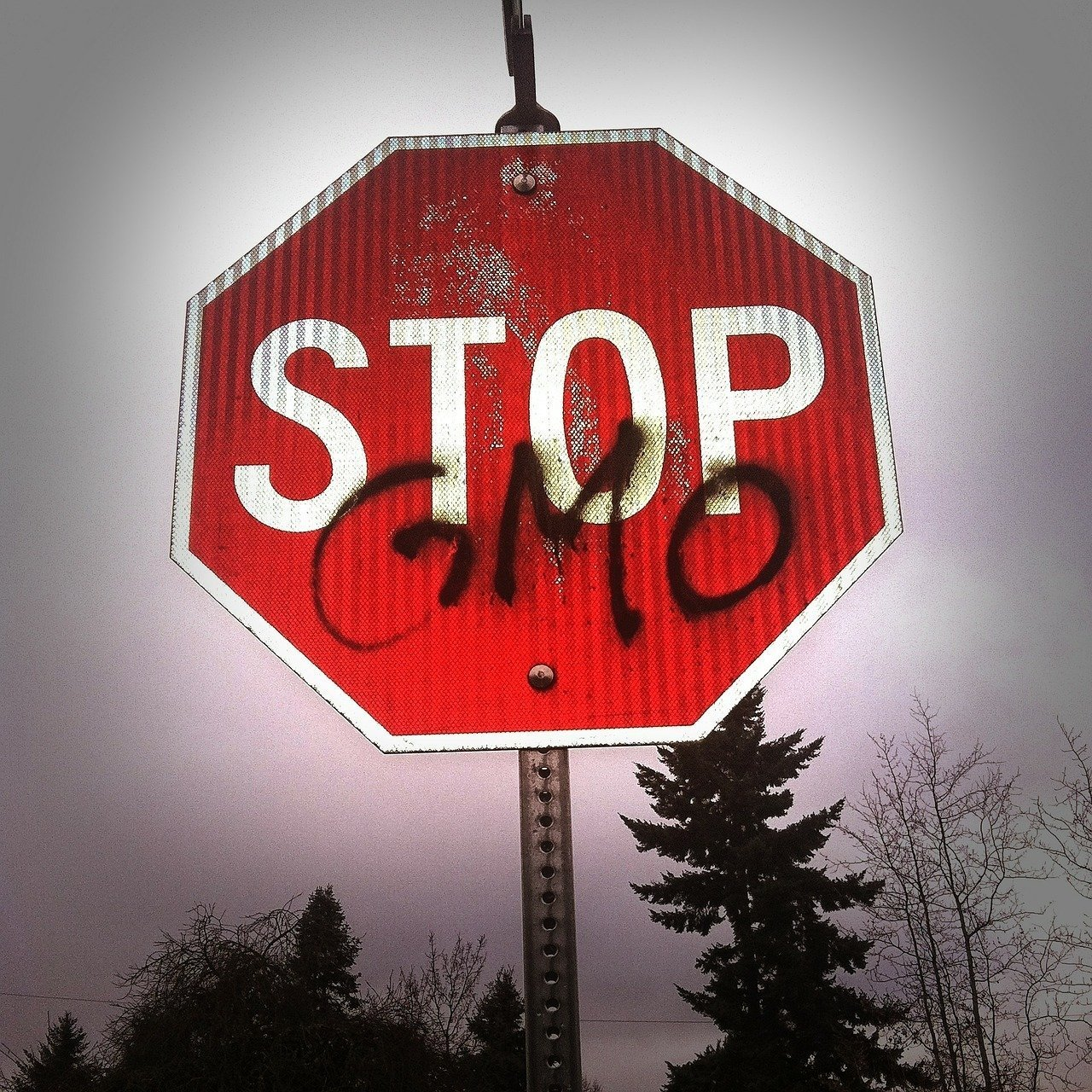 Hungary to produce GMO-free milk, meat, eggs