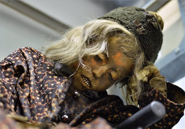 Exhibits a 150 year-old mummy at Mummy World exhibition in Budapest