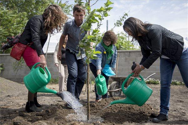 Budapest's largest community gardens open