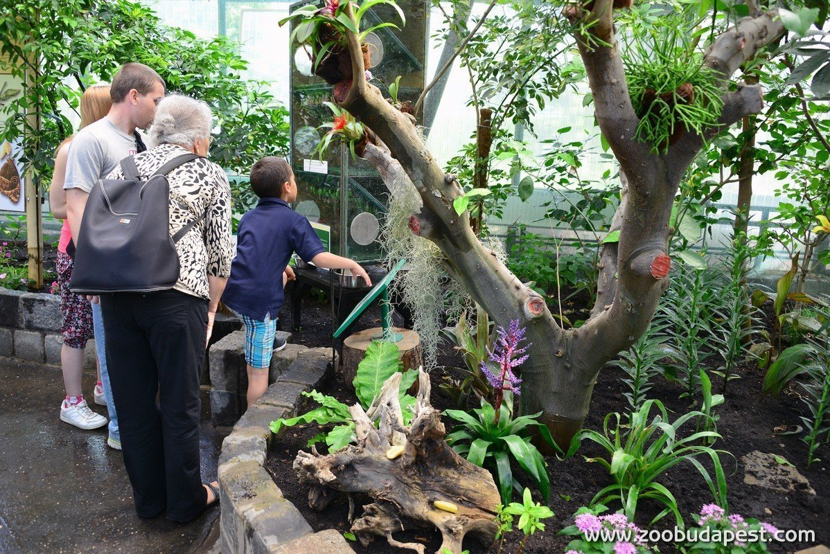 The Butterfly Garden has opened in Budapest Zoo