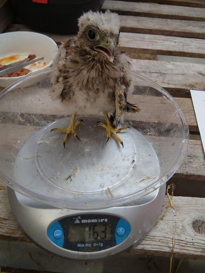 bird Hortobágy