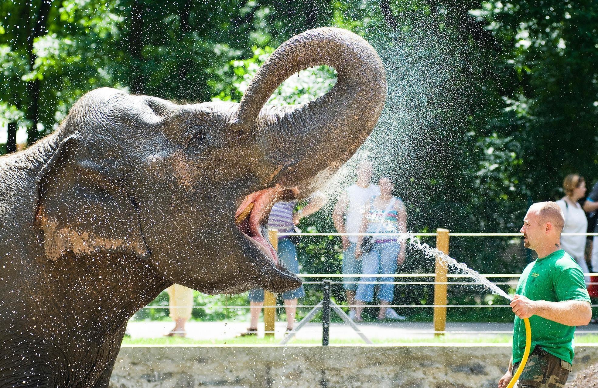 The zoo of Nyíregyháza wins 'Europe's best zoo' award in its category