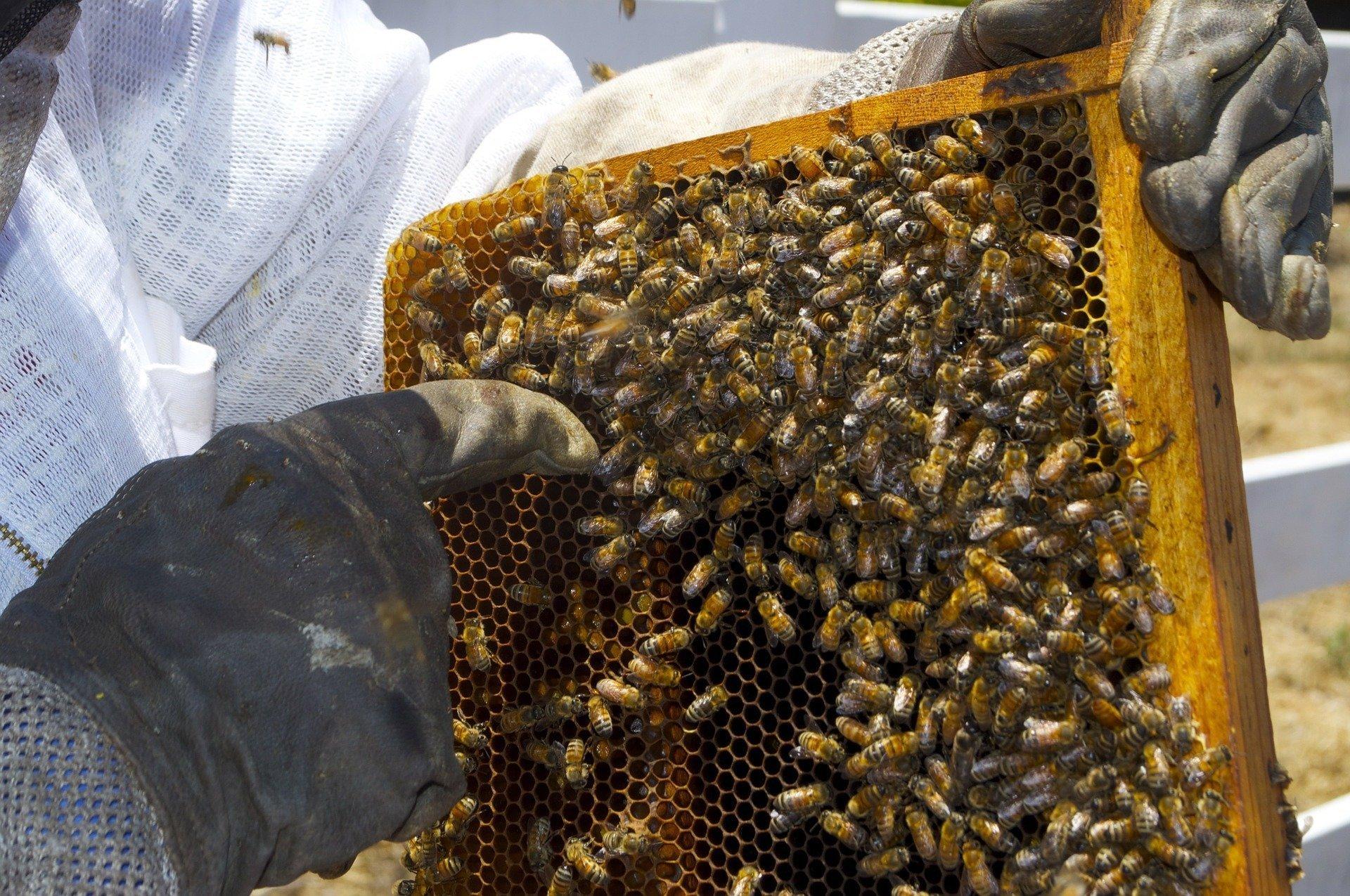 EU to discuss Hungarian initiative on honey, beekeepers