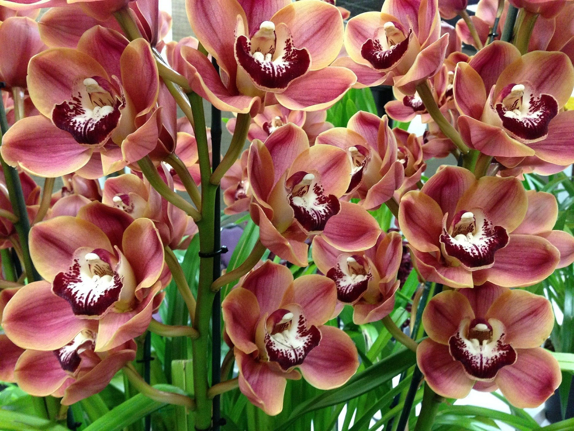 On this weekend: Orchid exhibition in the Vajdahunyad Castle