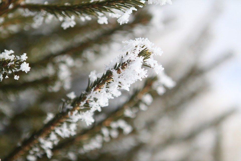 It seems we will not have a white Christmas this year - Daily News ...