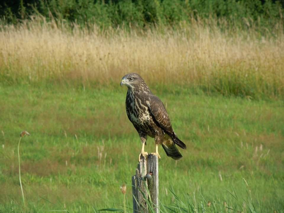 Severe bird poisoning at Lake Balaton