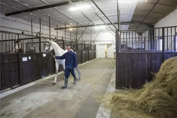 Hungarian breeding and racing horse deliveries start in China