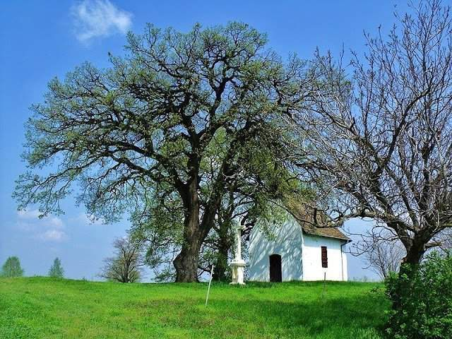 Vote for the Hungarian tree in the Tree of the Year contest!