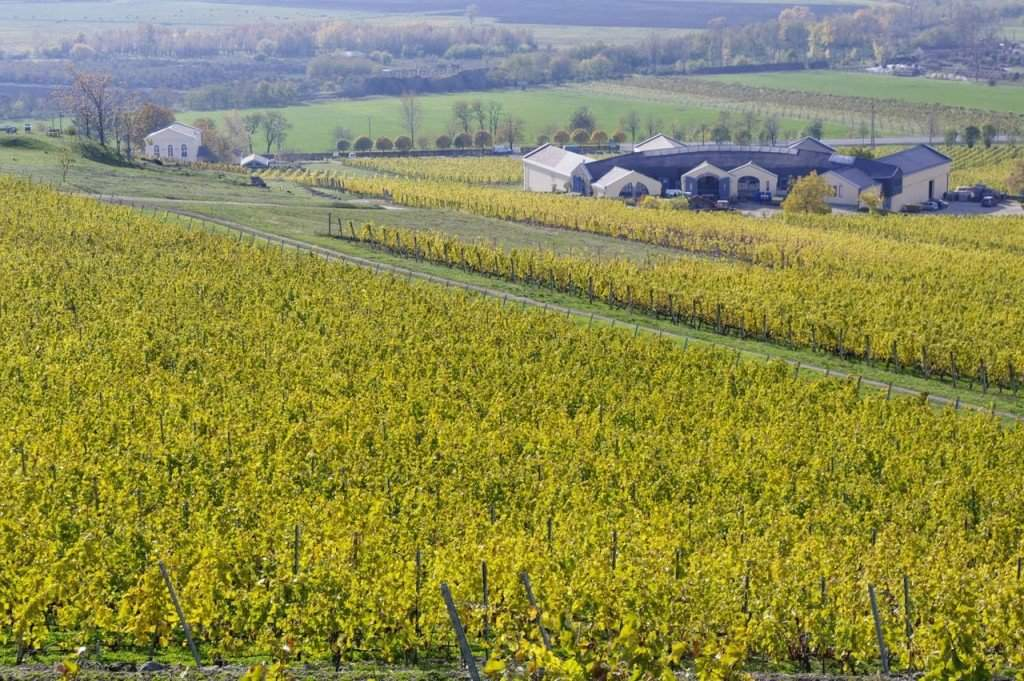 Wines introduced for the fourth Great Tokaj Wine Auction