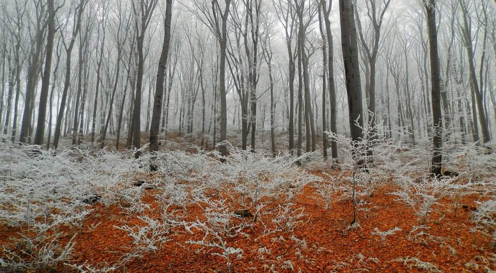 Frosty forest hungary