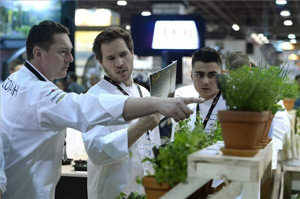 Bocuse d'Or European final begins in Budapest