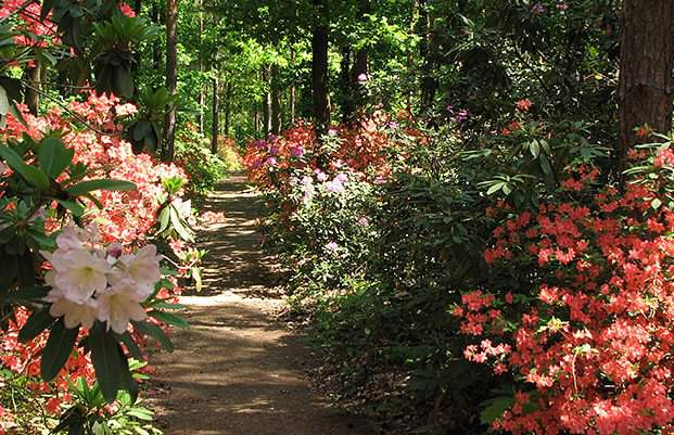 New accessible pathway in the Jeli Arboretum famous for its rhododendrons