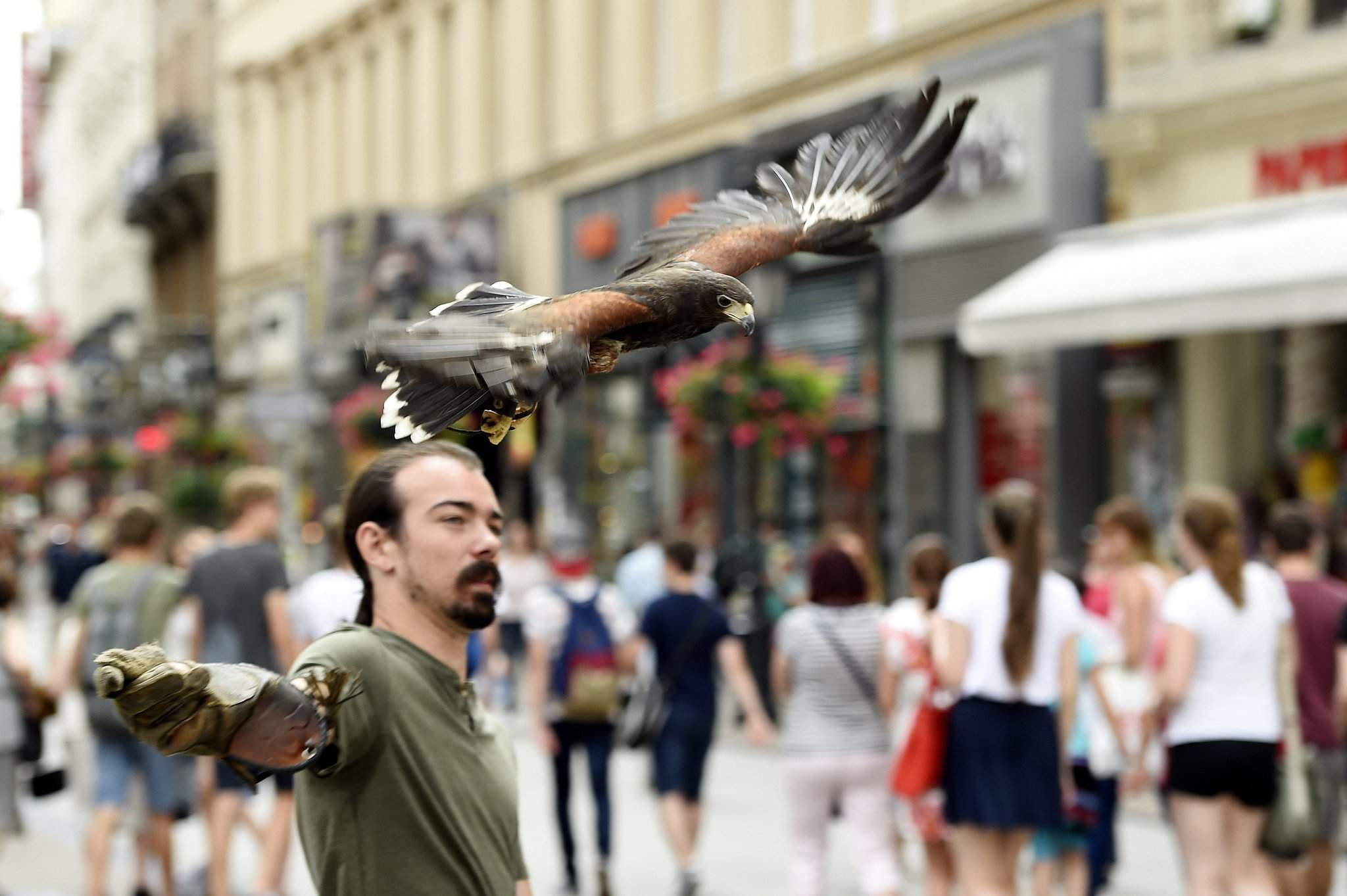 Birds of prey are deployed to keep messy pigeons away from Váci Street pedestrian district in Budapest – Photos