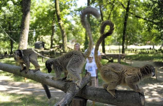 Sóstó Zoo welcomes visitors with renewed lemur forest and Mediterranean garden