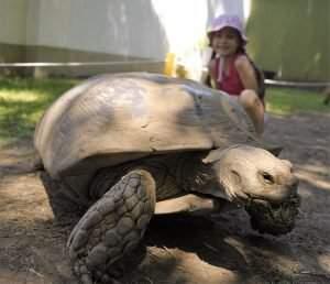 nyíregyházi állatpark teknős