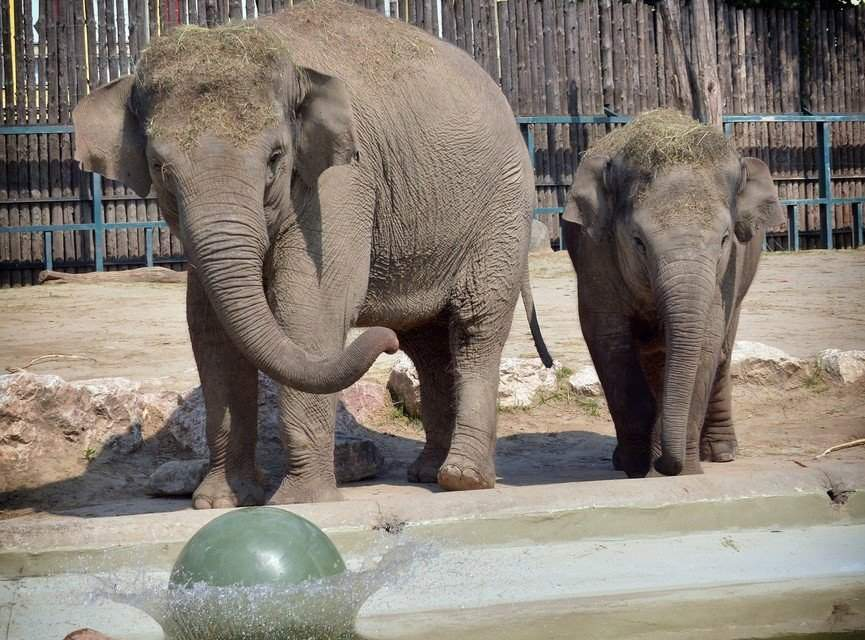 The Budapest Zoo is 150 years old!