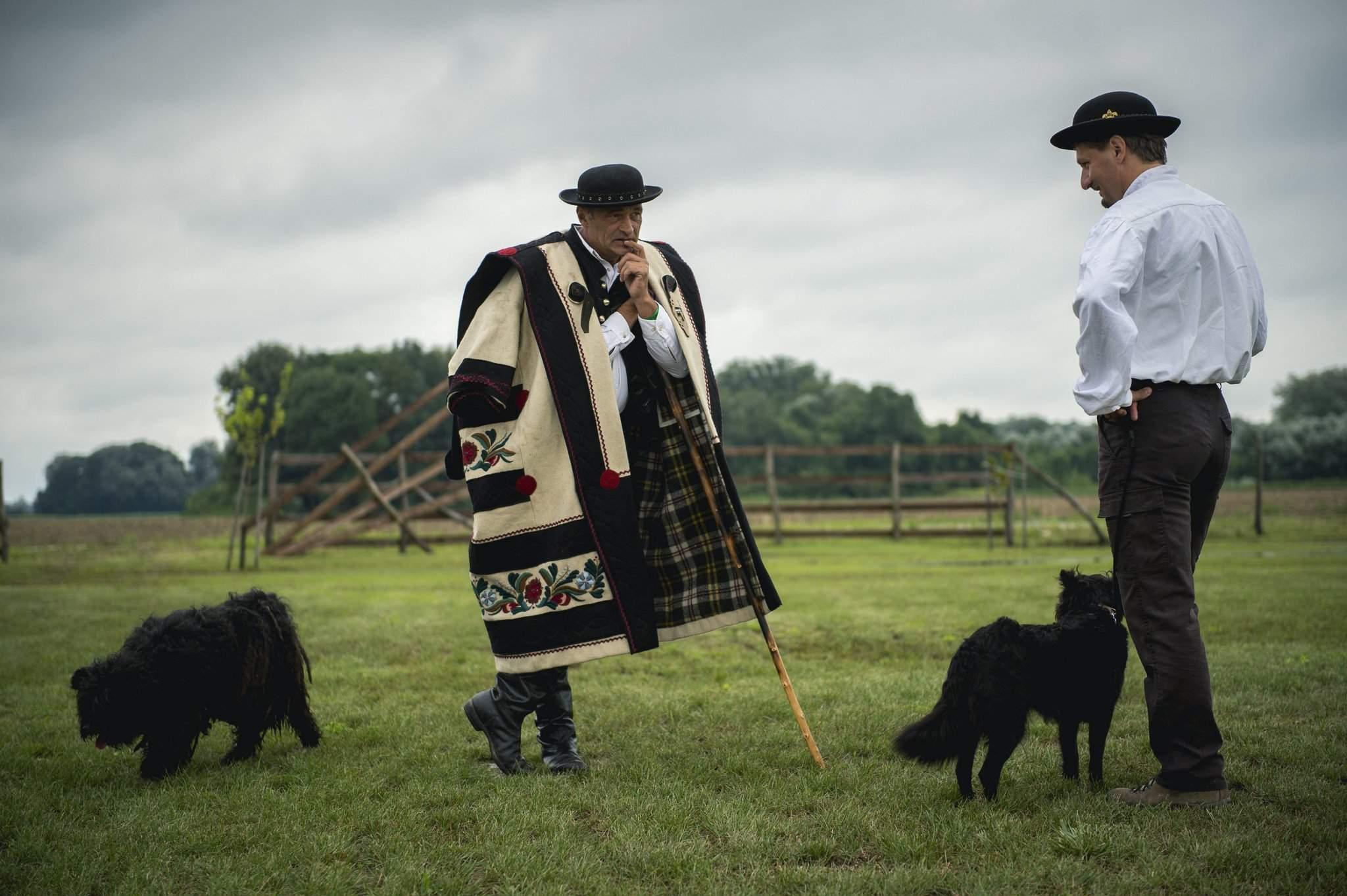 dog-dogs-puli-tradition
