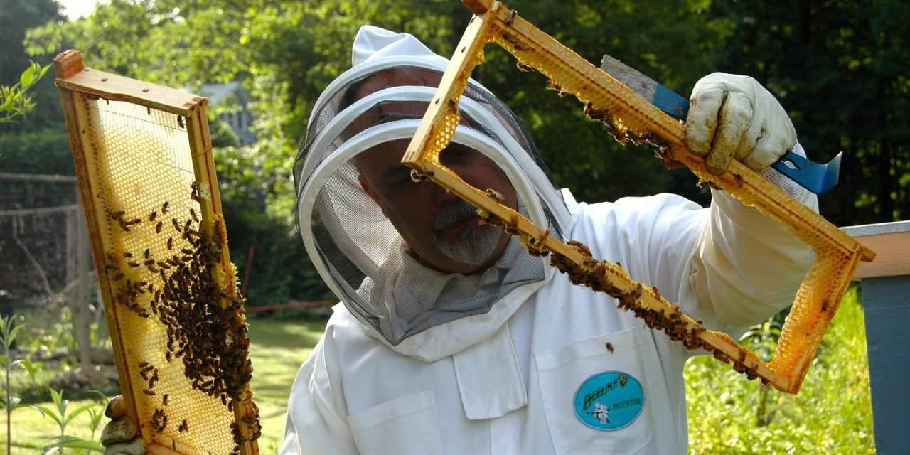 Hungary provides friendly environment for bees