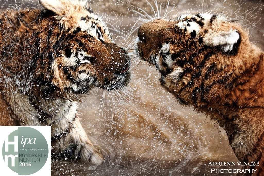 ipa-tigers