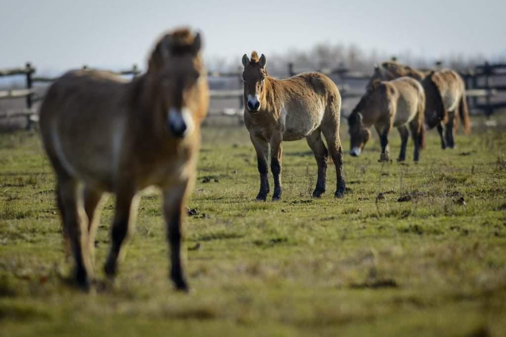 horse-hungary-hortobágy