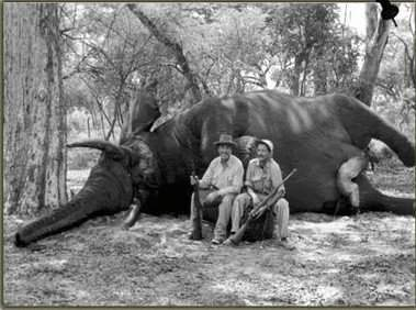 The story of the largest elephant