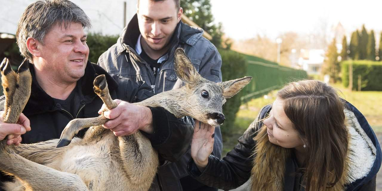 Deer rescued from freezing water – PHOTOS