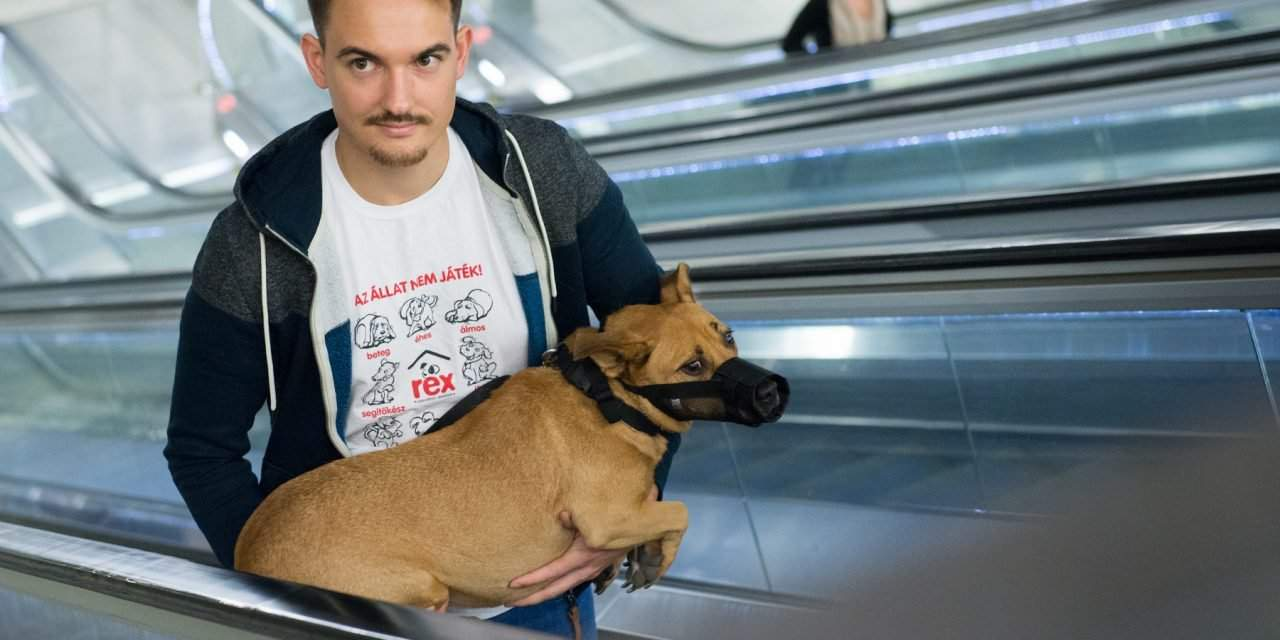 Information guide on how to travel with dogs on public transport in Hungary