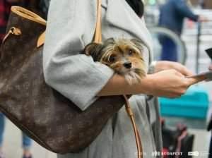 dog-transport-3