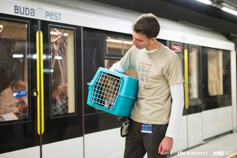 dog-transport