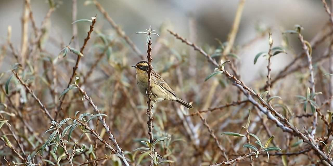 New bird species spotted in Hungary for the first time – VIDEOS