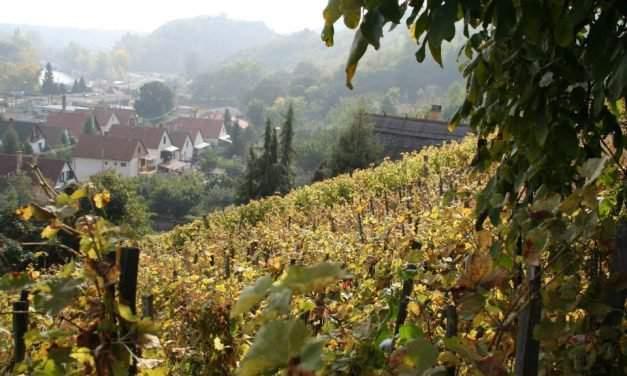 State pre-emption right in Tokaj wine region 'protecting world heritage'