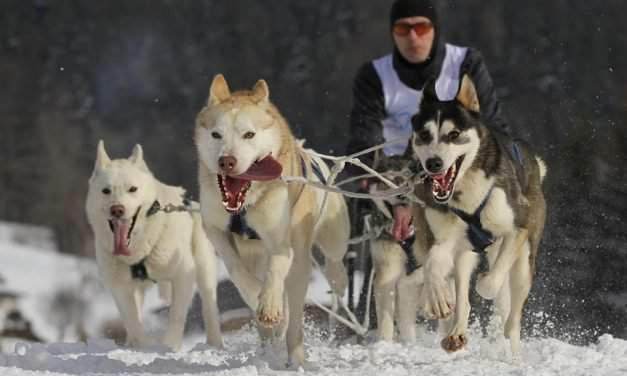 The Hungarian priest to become dogsled driver world champion