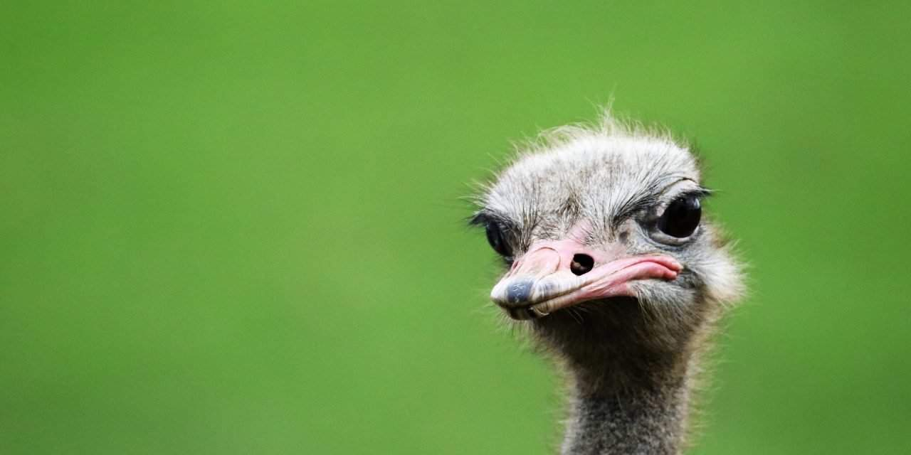 Crisis in the Hungarian ostrich industry