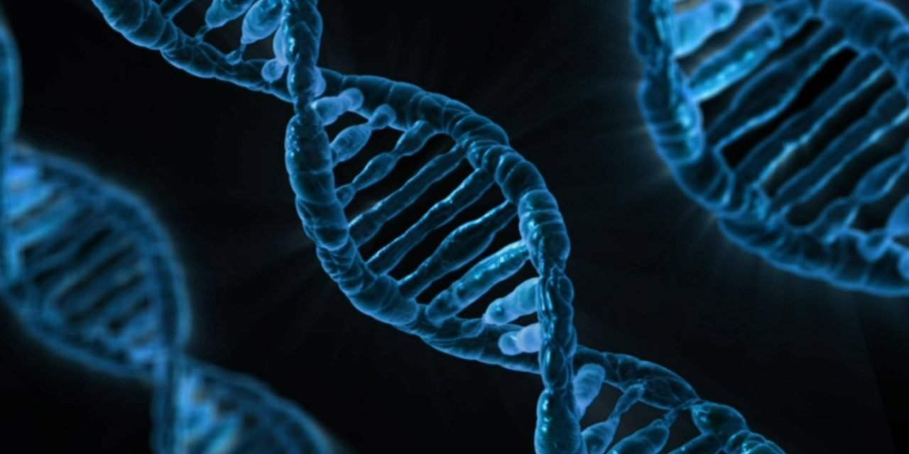 National Sustainable Development Council discusses gene bank plan
