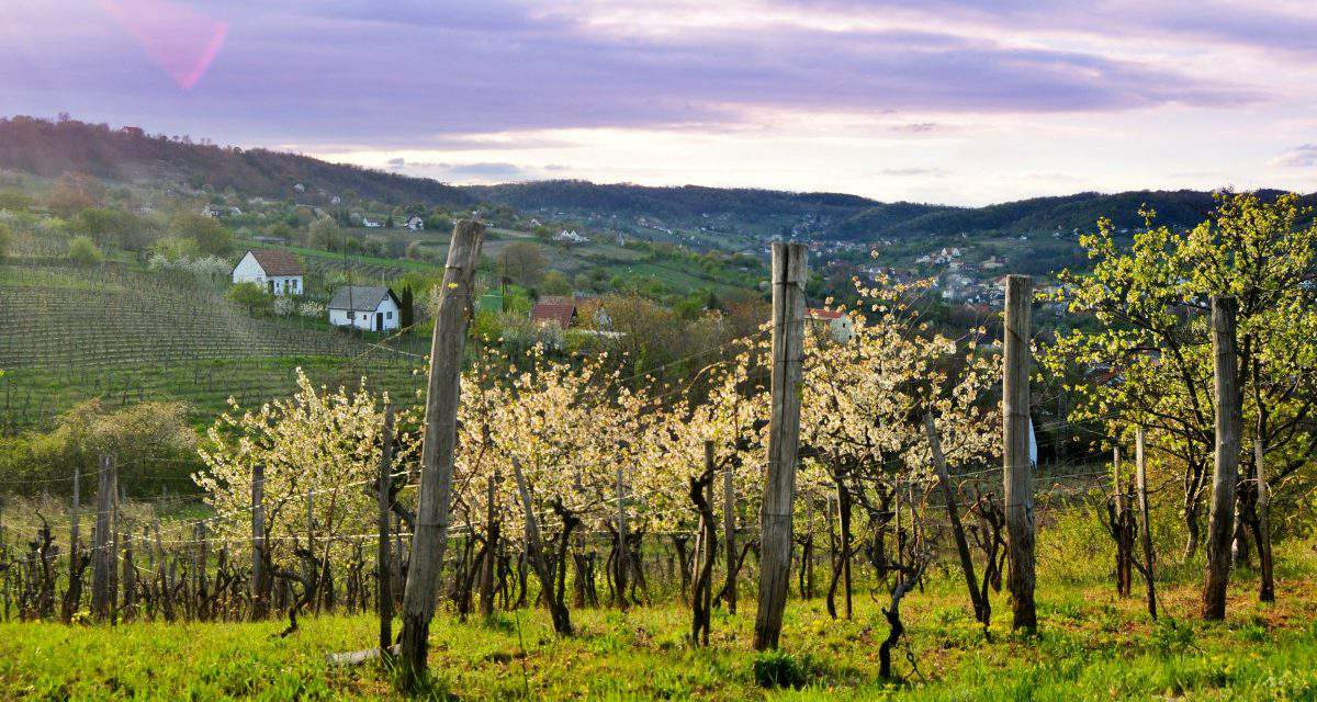 Hungarian wineries are profitable