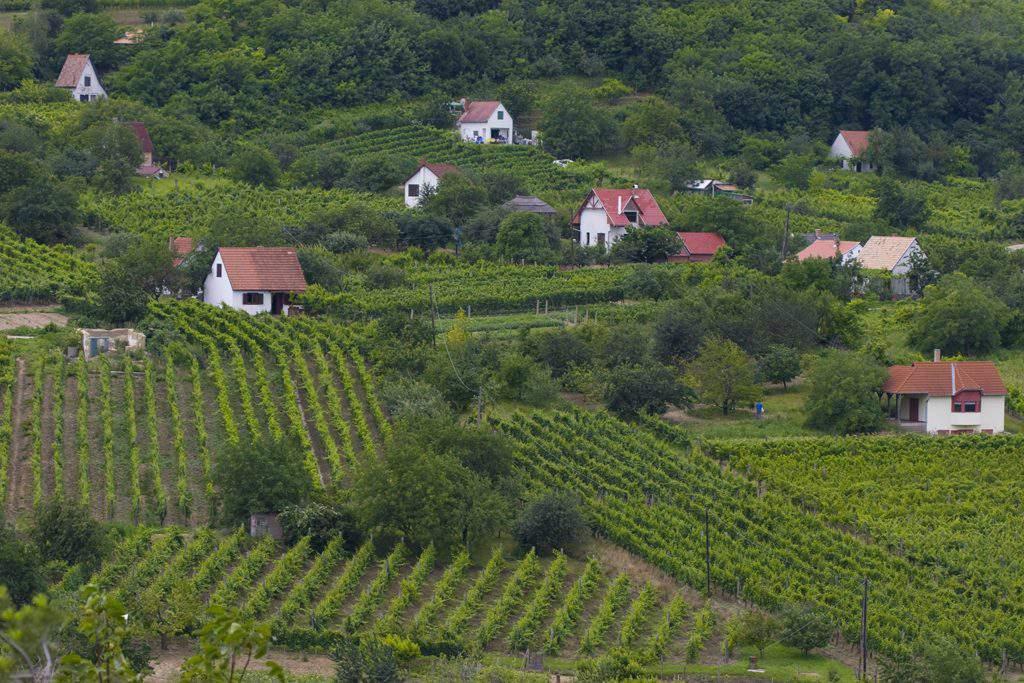 Szekszárd borvidék wine region grape