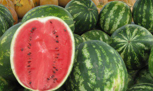 Hungarian melon in the stores – which one is the best?