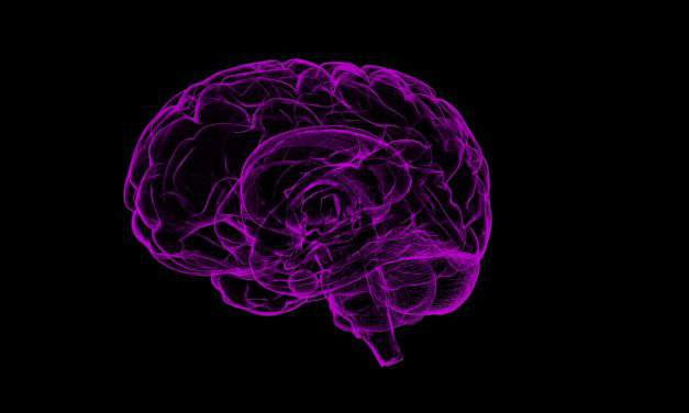 Hungarian research findings could contribute to improvement of memory