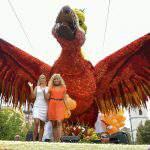 A reborn Phoenix is the winner of the Flower Carnival of Debrecen