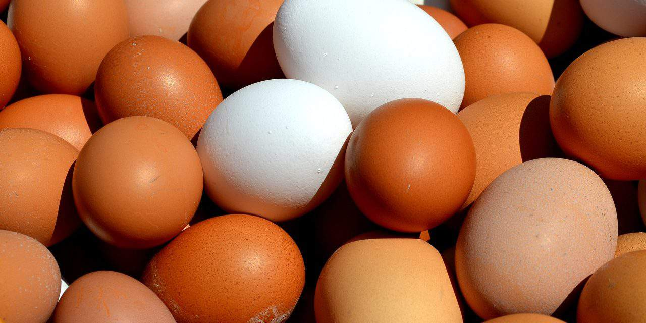 Insecticide contamination detected in further egg products