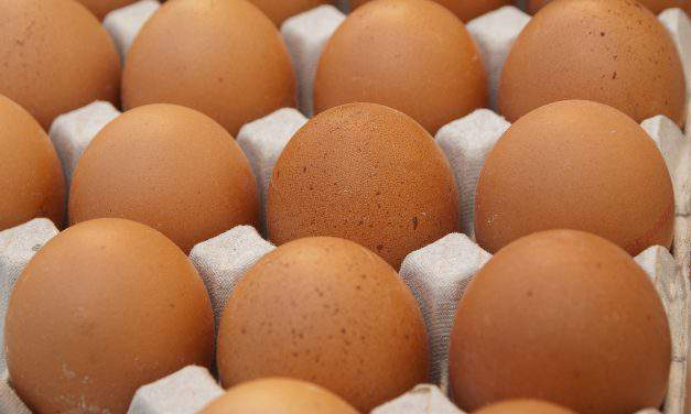 Eggs contaminated with insecticide detected in Hungary