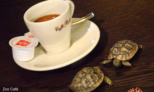 What makes animal cafés extremely popular in Budapest?