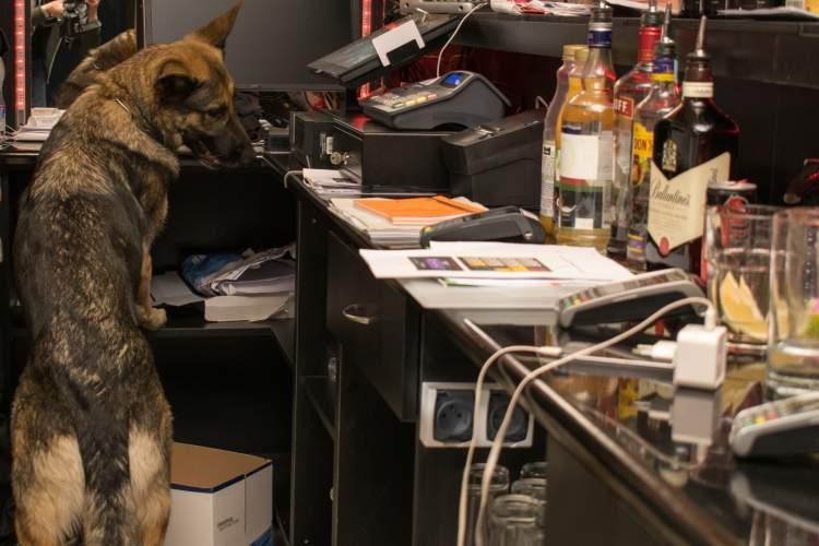 police-dog-hungary