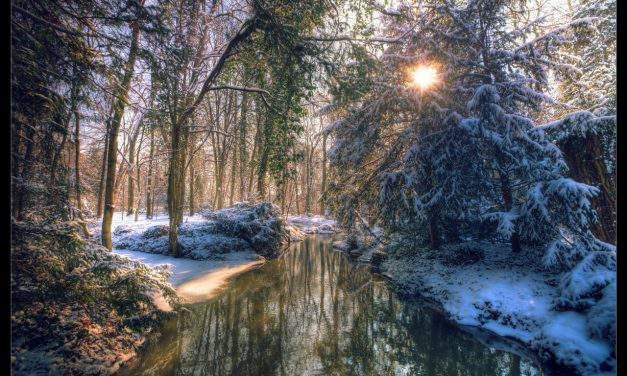 Hungary's most beautiful arboretums to visit in winter