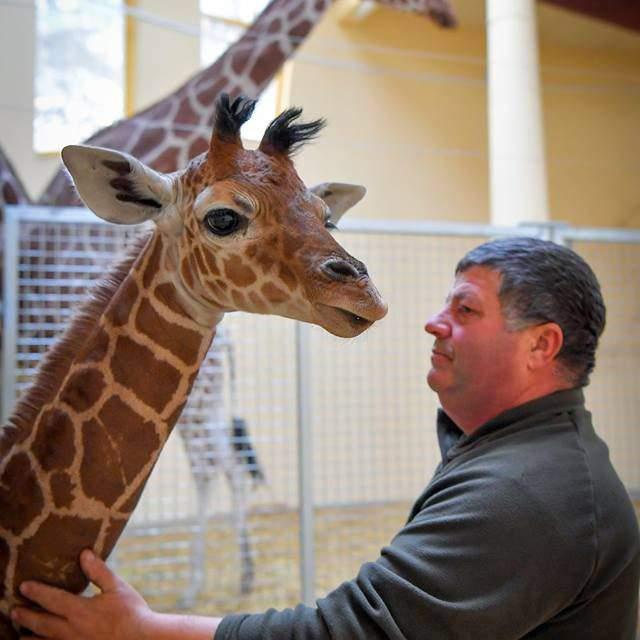 Super cute giraffe baby born in the Debrecen Zoo – PHOTO GALLERY