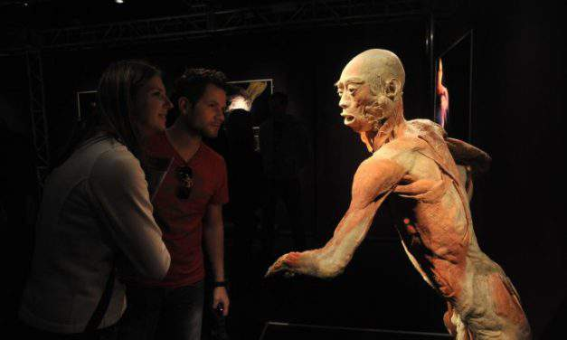 Let's meet the human body – Body exhibition coming to Budapest