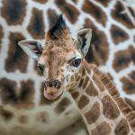 Latest news from the Hungarian zoos – Photos